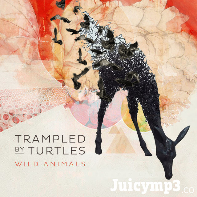 Download Trampled By Turtles - Ghosts